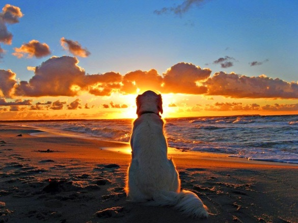 A dog watching a sunrise